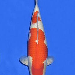 Onze keuze van de veilingvissen: afbeelding 6