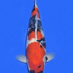 Onze keuze van de veilingvissen: afbeelding 9