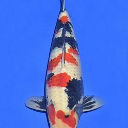 Onze keuze van de veilingvissen: afbeelding 10