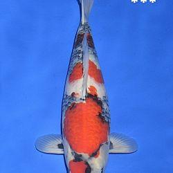 Onze keuze van de veilingvissen: afbeelding 11