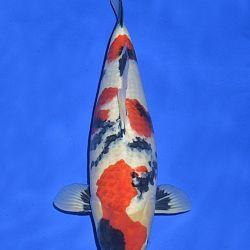 Onze keuze van de veilingvissen: afbeelding 13