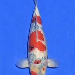 Onze keuze van de veilingvissen: afbeelding 19