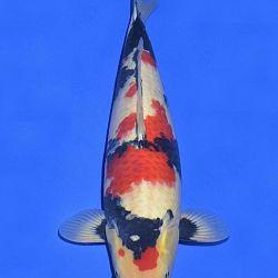 Onze keuze van de veilingvissen: afbeelding 20
