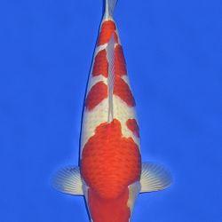 Onze keuze van de veilingvissen: afbeelding 22