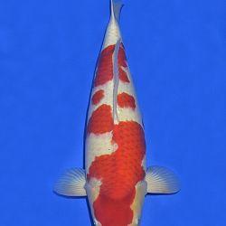 Onze keuze van de veilingvissen: afbeelding 23