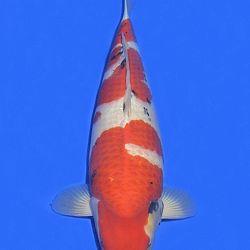 Onze keuze van de veilingvissen: afbeelding 31