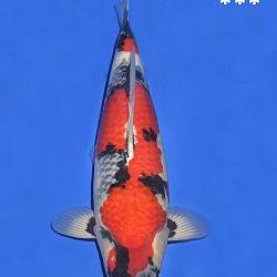 Onze keuze van de veilingvissen: afbeelding 37