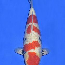 Onze keuze van de veilingvissen: afbeelding 41
