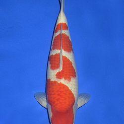 Onze keuze van de veilingvissen: afbeelding 44