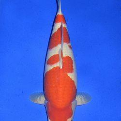 Onze keuze van de veilingvissen: afbeelding 47