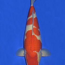 Onze keuze van de veilingvissen: afbeelding 48