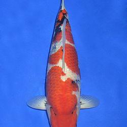 Onze keuze van de veilingvissen: afbeelding 55