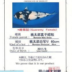 Ook een shiro in promotie: afbeelding 1
