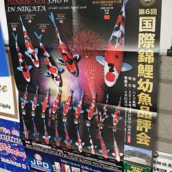 Ook eens meedoen aan Japanse show: afbeelding 3