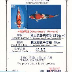 Op zijn Japans: afbeelding 3