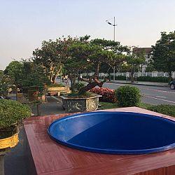 Queenkoi Vietnam : afbeelding 2