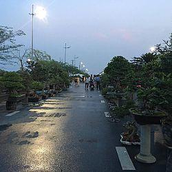 Queenkoi Vietnam : afbeelding 4