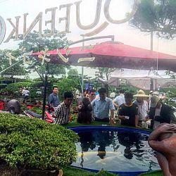 Queenkoi Vietnam : afbeelding 5