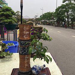 Queenkoi Vietnam : afbeelding 11
