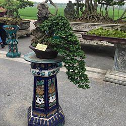 Queenkoi Vietnam : afbeelding 15