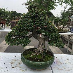 Queenkoi Vietnam : afbeelding 19