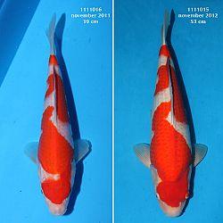Resultaten Taniguchi San: afbeelding 2