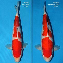 Resultaten Taniguchi San: afbeelding 6