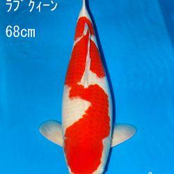 Sakai Auction, 22 maart: afbeelding 1