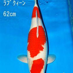 Sakai Auction, 22 maart: afbeelding 2