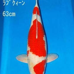 Sakai Auction, 22 maart: afbeelding 3