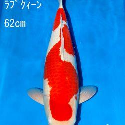 Sakai Auction, 22 maart: afbeelding 4
