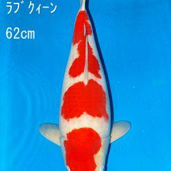 Sakai Auction, 22 maart: afbeelding 5