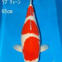 Sakai Auction, 22 maart: afbeelding 6