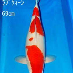 Sakai Auction, 22 maart: afbeelding 7