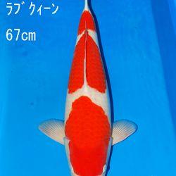 Sakai Auction, 22 maart: afbeelding 9