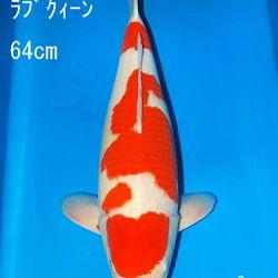 Sakai Auction, 22 maart: afbeelding 10