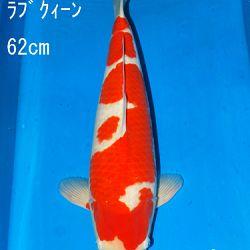 Sakai Auction, 22 maart: afbeelding 12