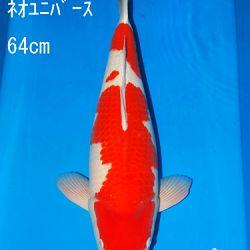 Sakai Auction, 22 maart: afbeelding 14