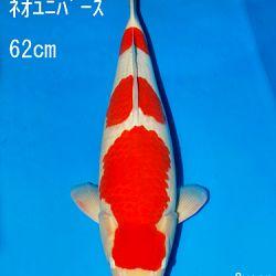 Sakai Auction, 22 maart: afbeelding 15