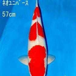 Sakai Auction, 22 maart: afbeelding 16