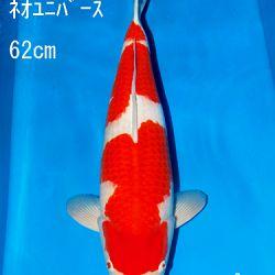 Sakai Auction, 22 maart: afbeelding 17