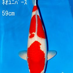Sakai Auction, 22 maart: afbeelding 18