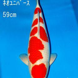 Sakai Auction, 22 maart: afbeelding 19