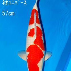 Sakai Auction, 22 maart: afbeelding 20
