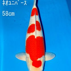 Sakai Auction, 22 maart: afbeelding 21