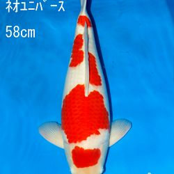 Sakai Auction, 22 maart: afbeelding 23