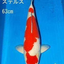 Sakai Auction, 22 maart: afbeelding 25