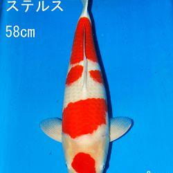 Sakai Auction, 22 maart: afbeelding 26