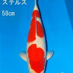 Sakai Auction, 22 maart: afbeelding 27