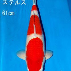 Sakai Auction, 22 maart: afbeelding 28